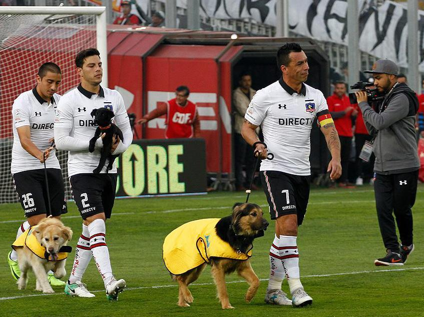 Chilean team Colo-Colo use rescue dogs as mascots in hope to find them a new home