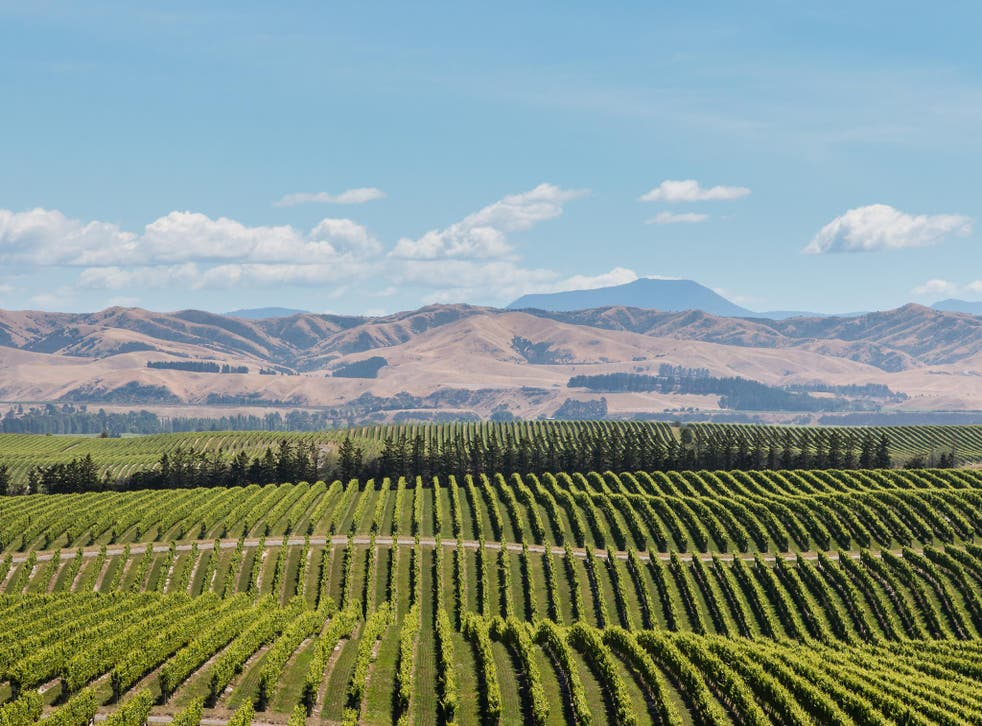 Blue-sky thinking: pick the right sauvignon blanc to wash away old prejudices about NZ