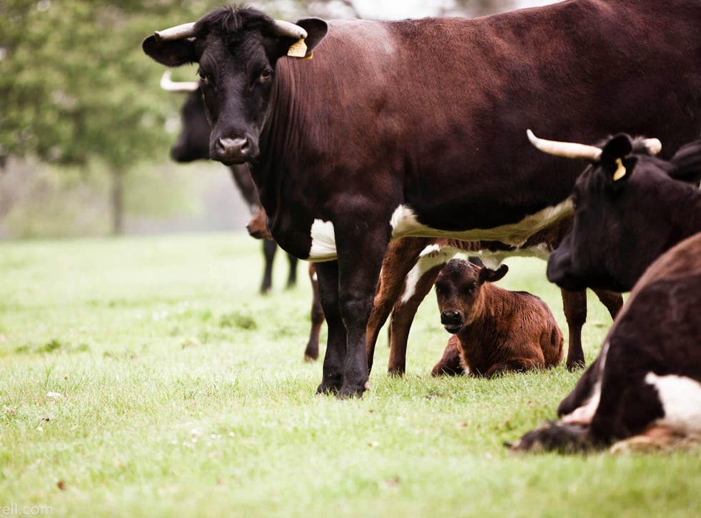 Bull market: expressing curiosity about the provenance of meat is the consumer's very power to keep suppliers on their toes when it comes to animal welfare