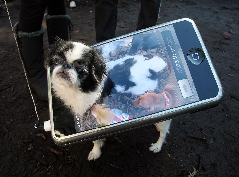 Bon the dog poses as an iPhone during the 17th annual Tompkins Square Halloween Dog Parade October 28, 2007 in New York City