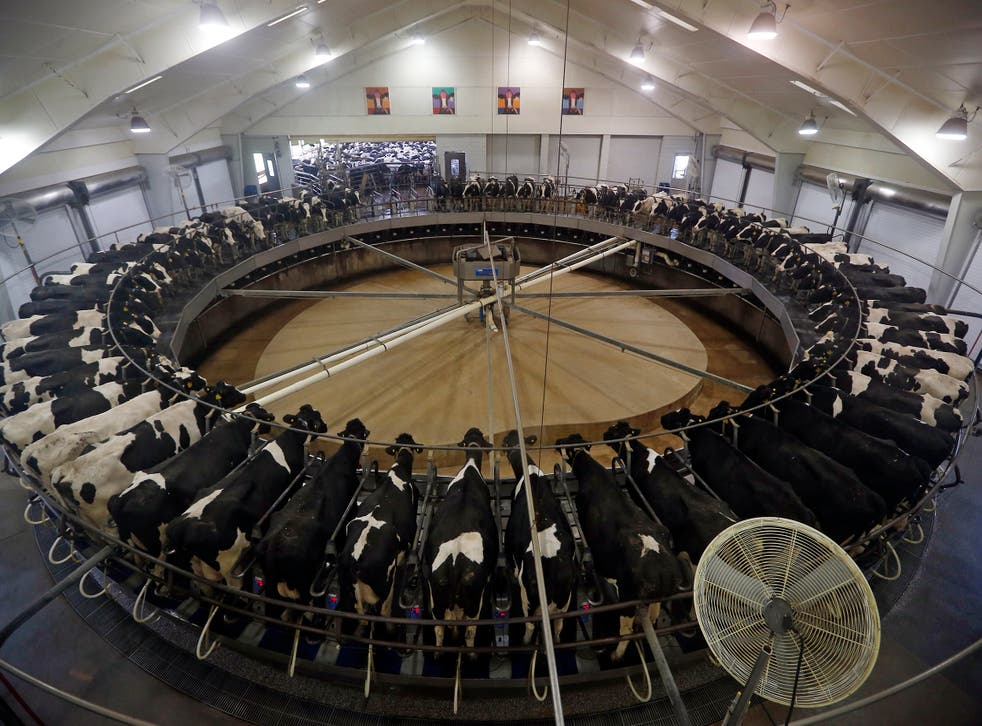 Cows in a milking carousel in the US, where safety standards for cancer-causing toxins are lower than the EU