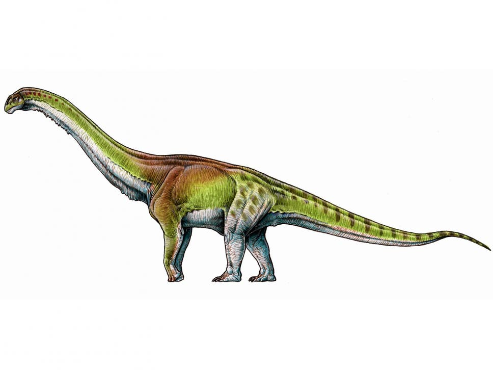 Artists Impression Of The Patagotitan Mayorum As Fossilised Bones Six Young Adult Dinosaurs
