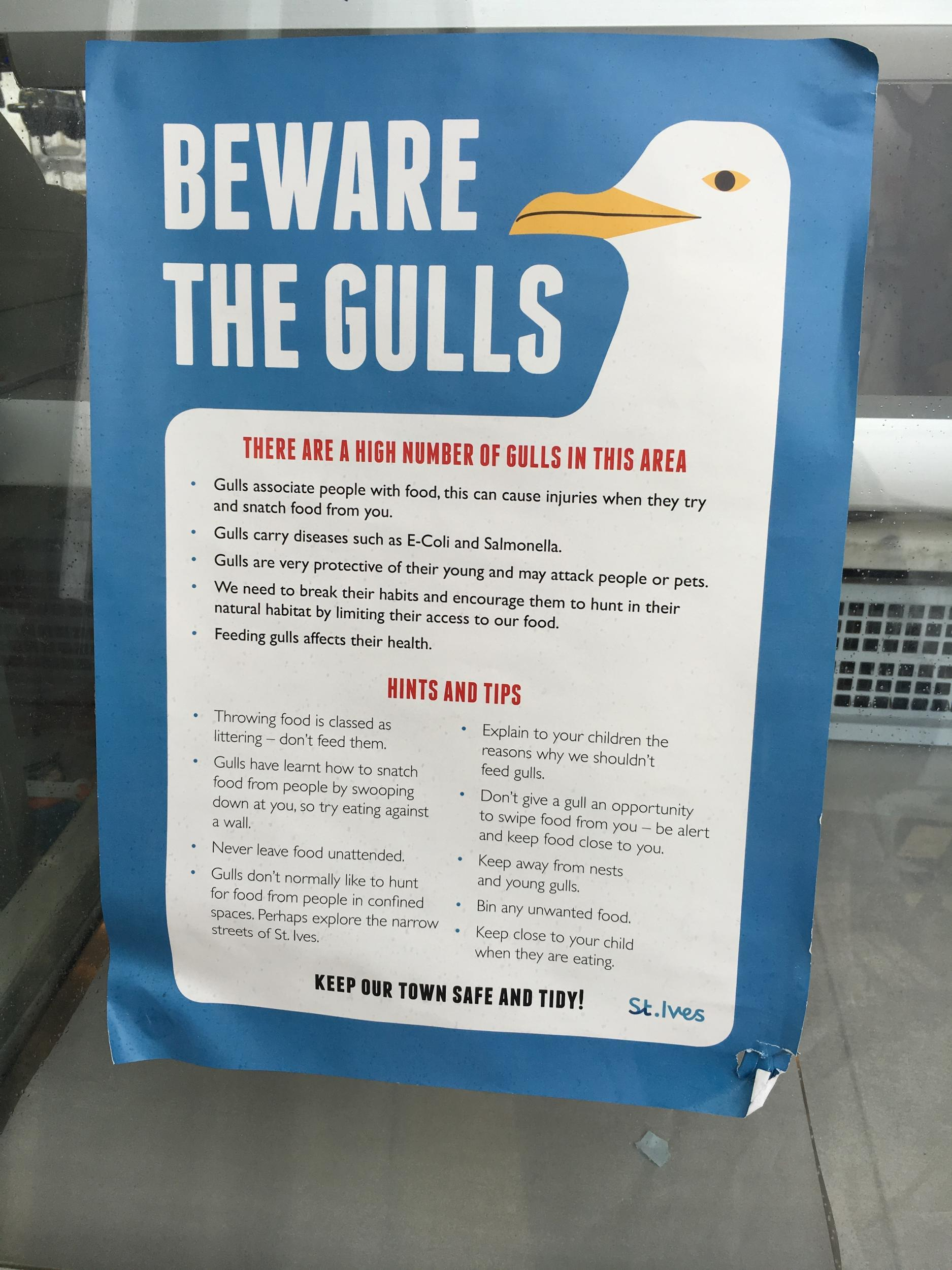 What happens when seagulls attack? 'It's a war zone, we are even