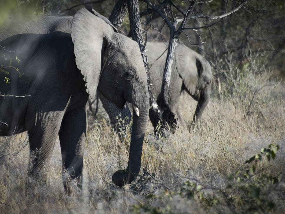 Big game hunter trampled to by elephant in Namibia   The ... Safari Hunting Cave House Designs Html on