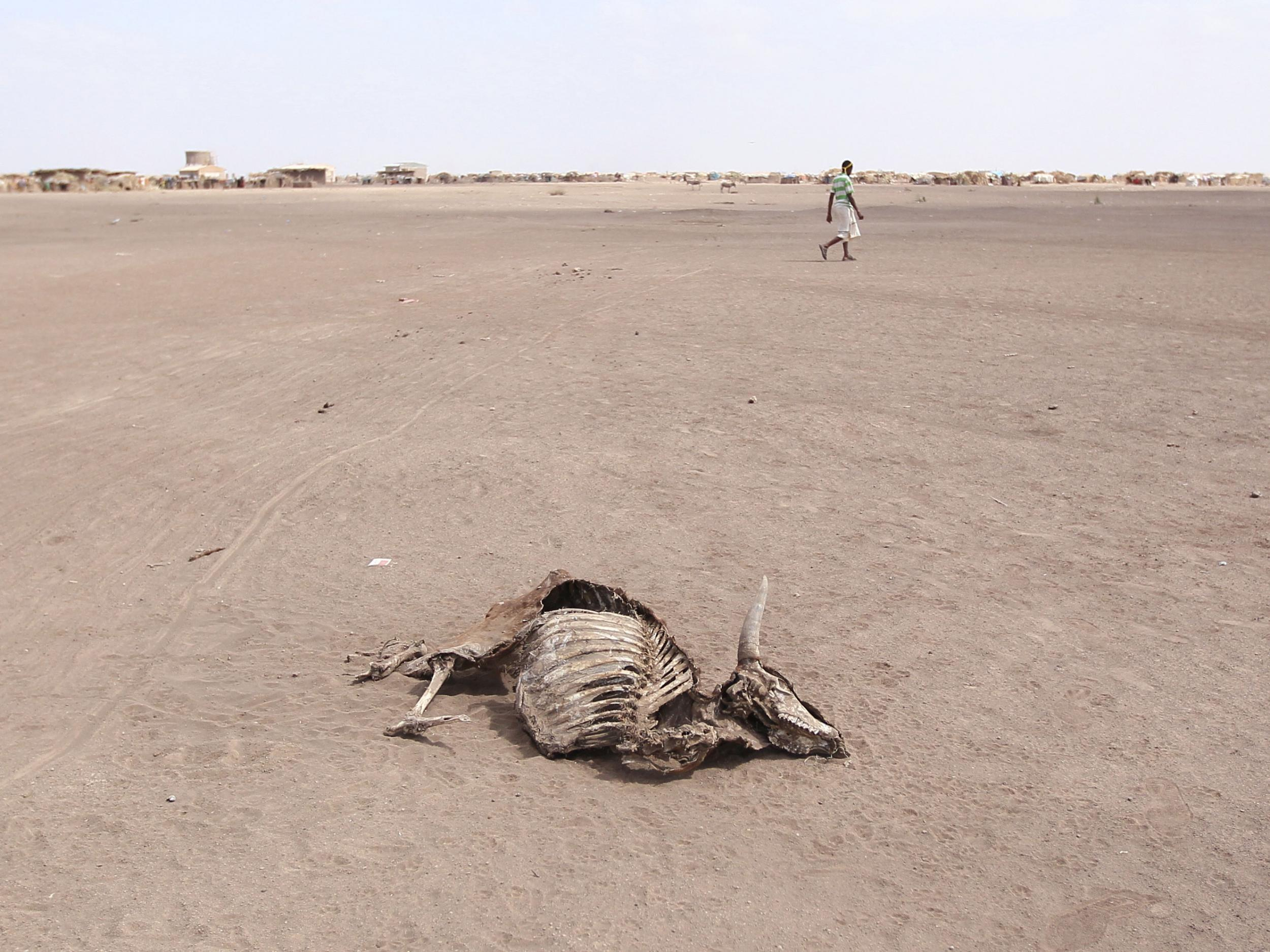 Ethiopia drought: Millions of people urgently in need of
