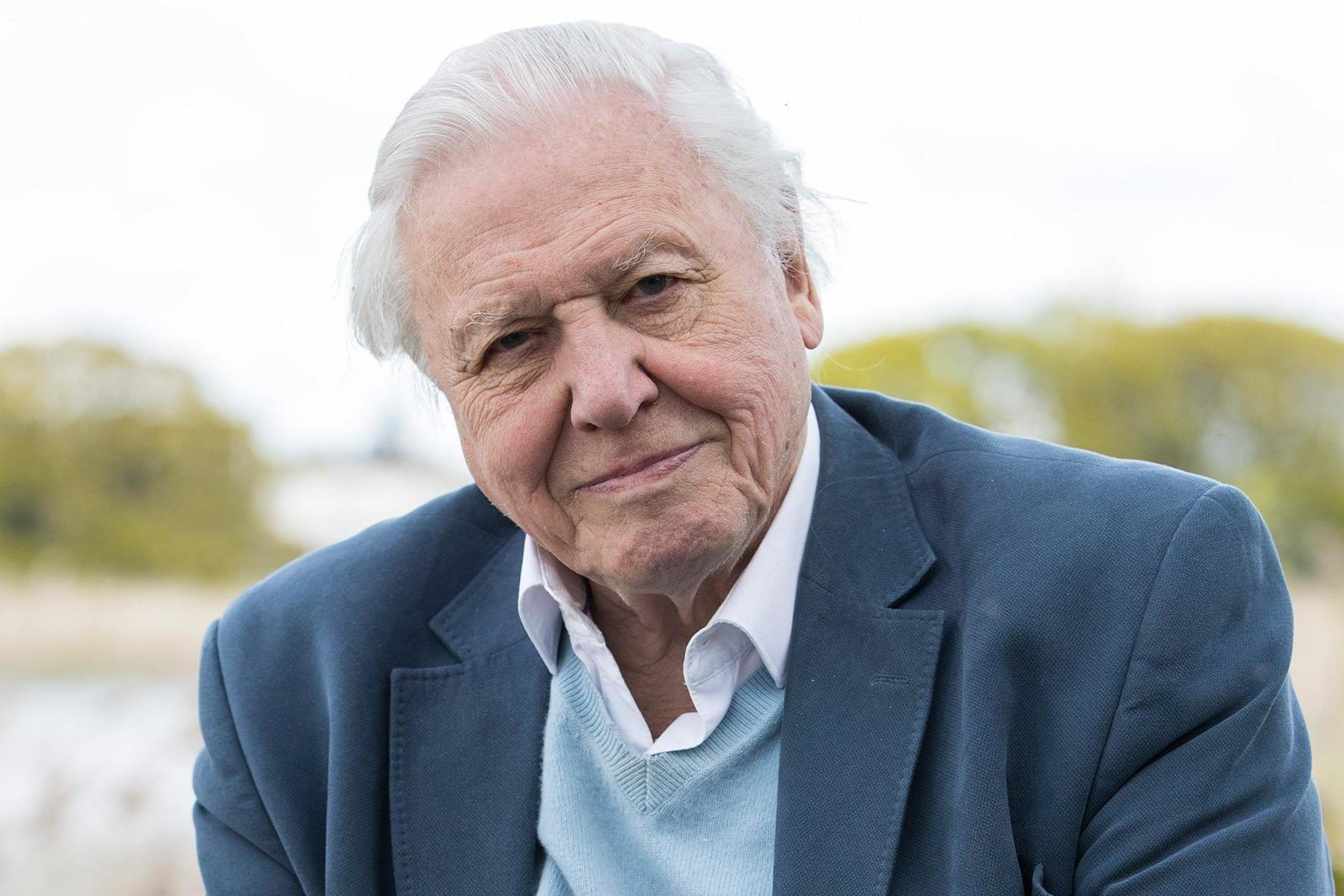 Watching David Attenborough documentaries just as good for you as mindfulness, study finds