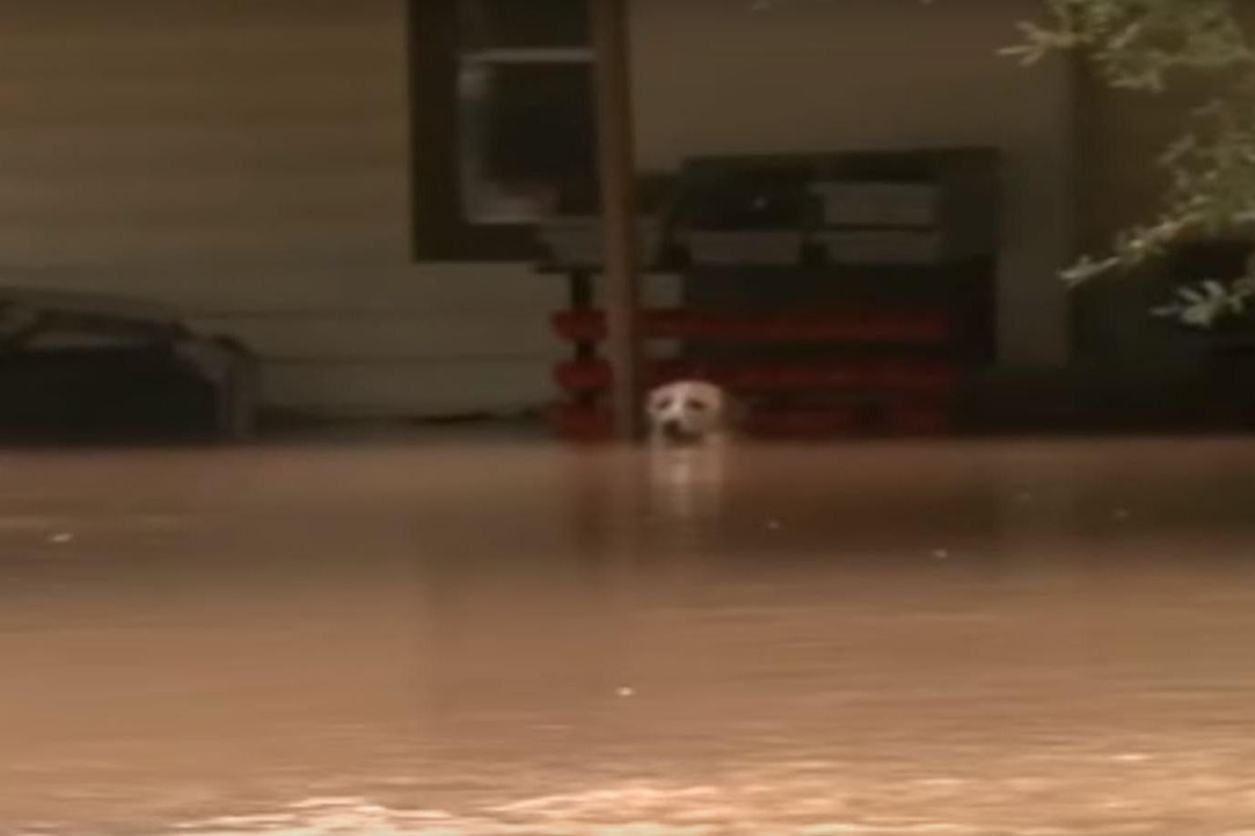 Hurricane Harvey Police Threaten Dog Owners With Arrest Amid - Some people tied their dogs up and left them to die during the flood