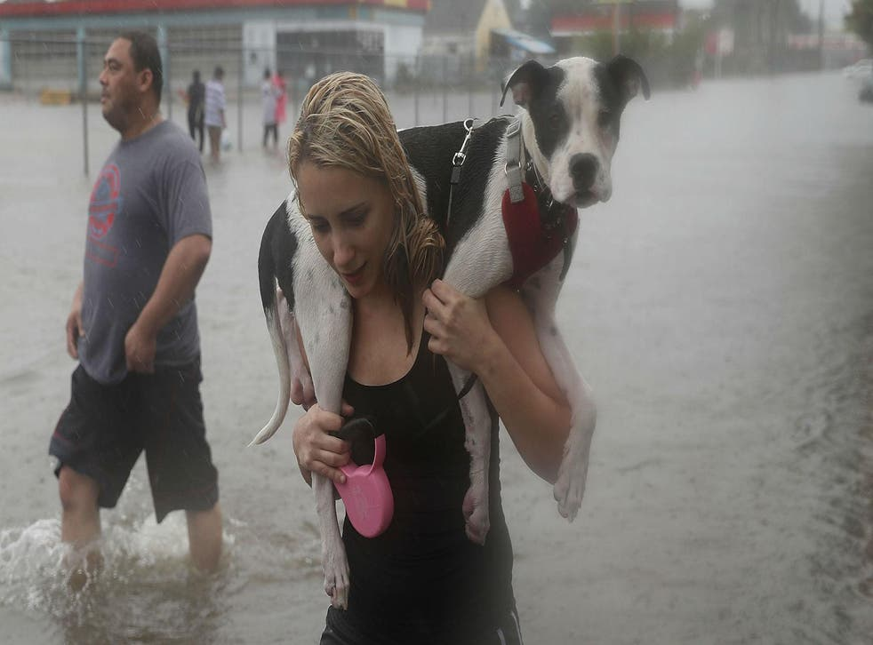 Naomi Coto carries Simba on her shoulders as they evacuate their home after the area was inundated with flooding from Hurricane Harvey on August 27, 2017 in Houston, Texas. Harvey, which made landfall north of Corpus Christi late Friday evening, is expected to dump upwards to 40 inches of rain in Texas over the next couple of days. Picture: