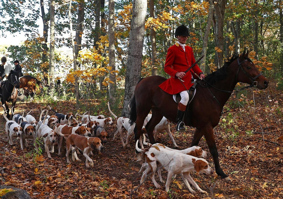 00df25f652a0bf 85% of the British public are opposed to repealing fox hunting ban ...