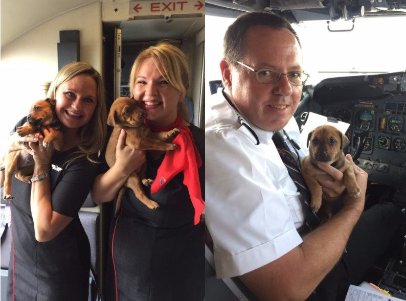 TIL Southwest Airlines flew a plane full of puppies to help them escape from Hurricane Harvey