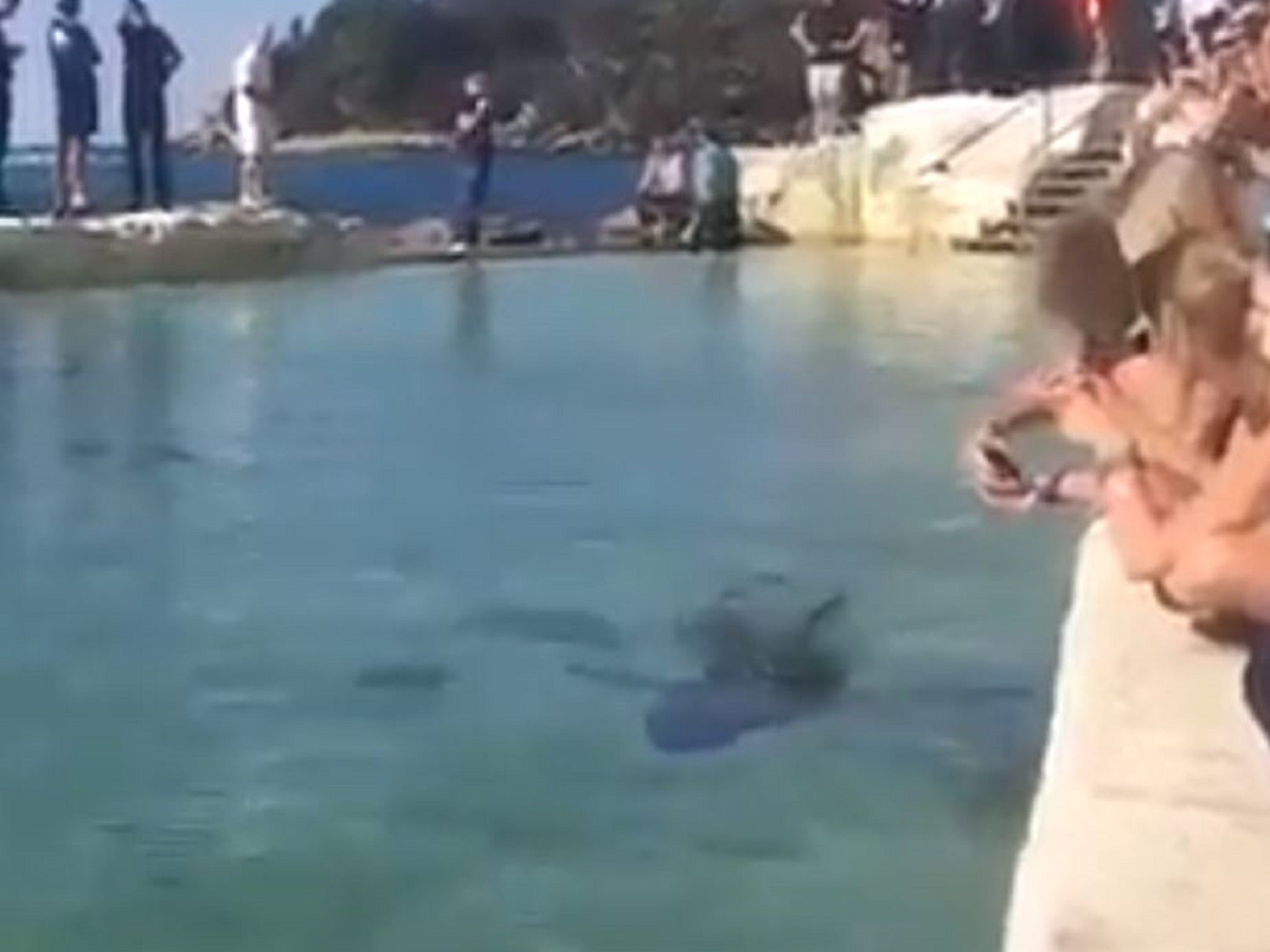 Great white shark put in public swimming pool after washing up on australian beach the independent for Target swimming pools australia