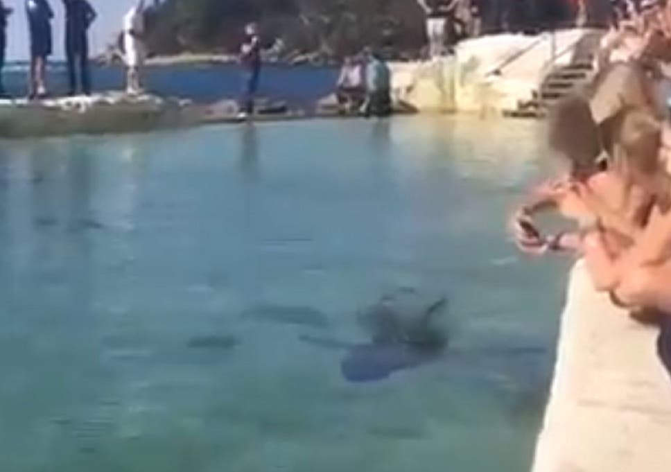 Great white shark put in public swimming pool after washing