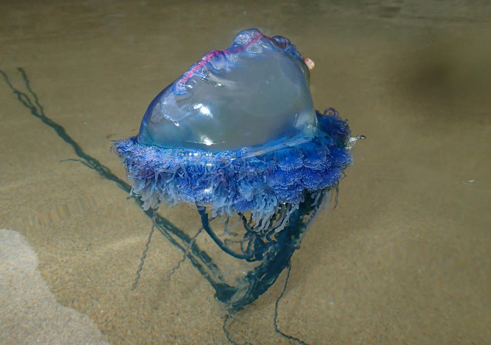 dating a portuguese man