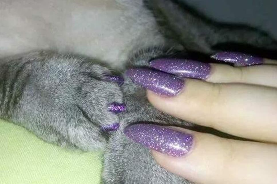 Should You Give Your Cat a Pedicure?