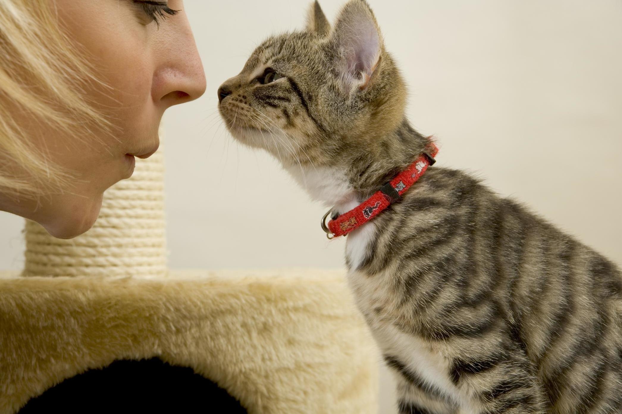 картинки с говорящими кошками текущий