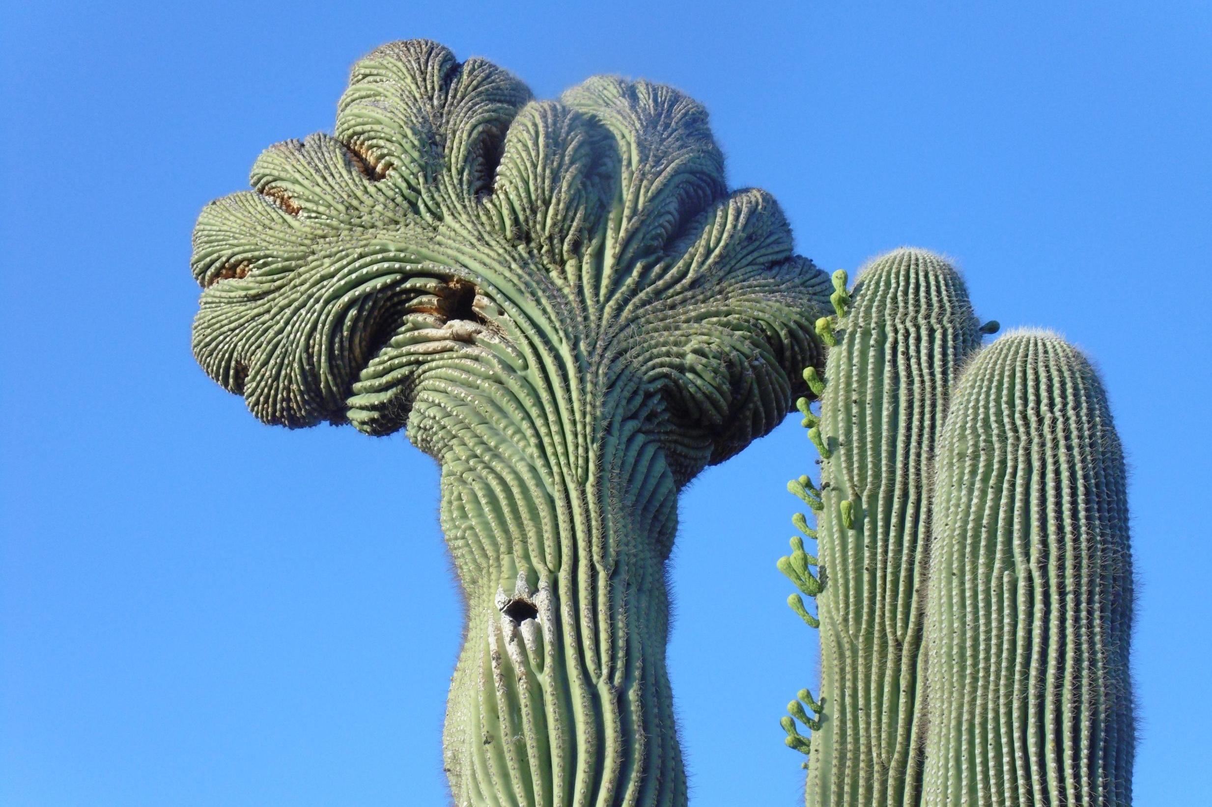 Cactus Latest News Breaking Stories And Comment The Independent
