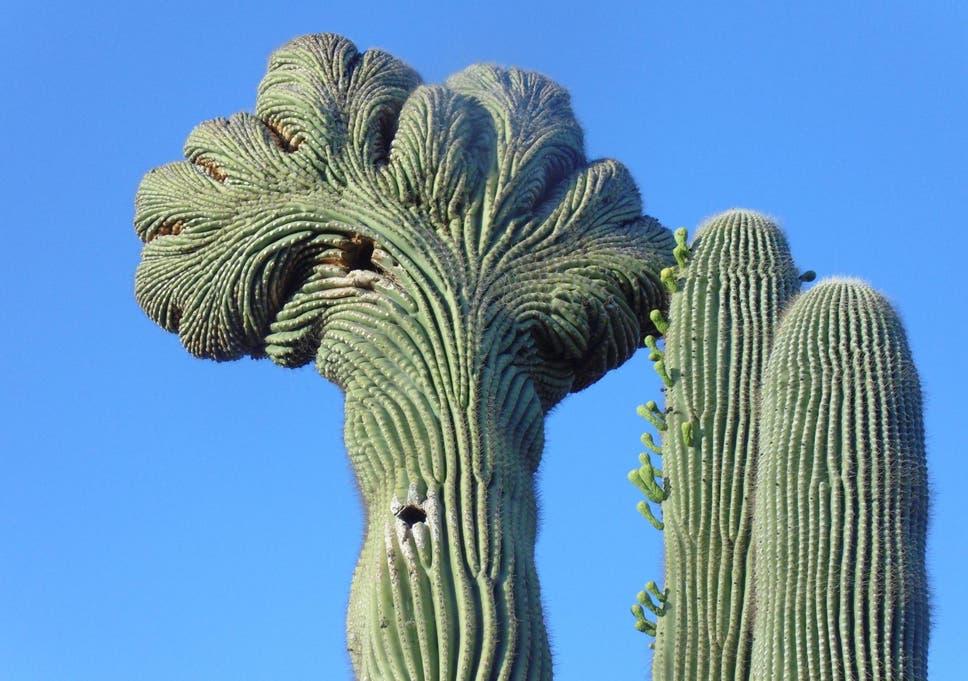 the cactus poachers of phoenix who are ruining the arizona desert
