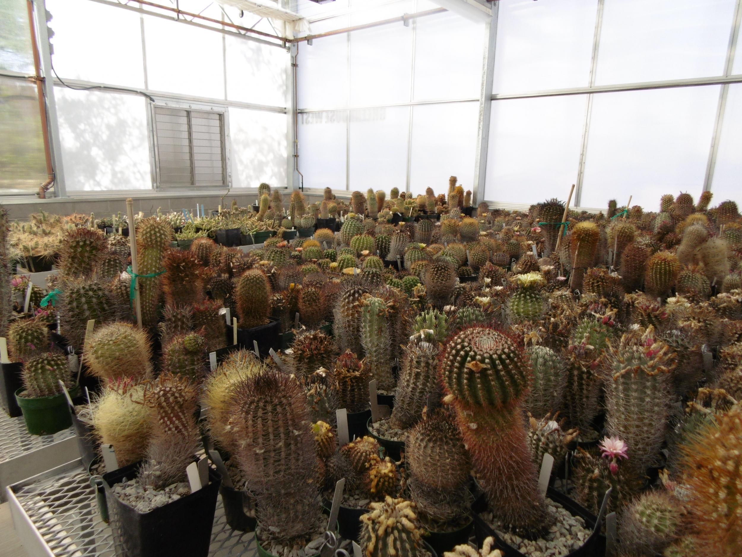 The cactus poachers of Phoenix who are ruining the Arizona desert ...
