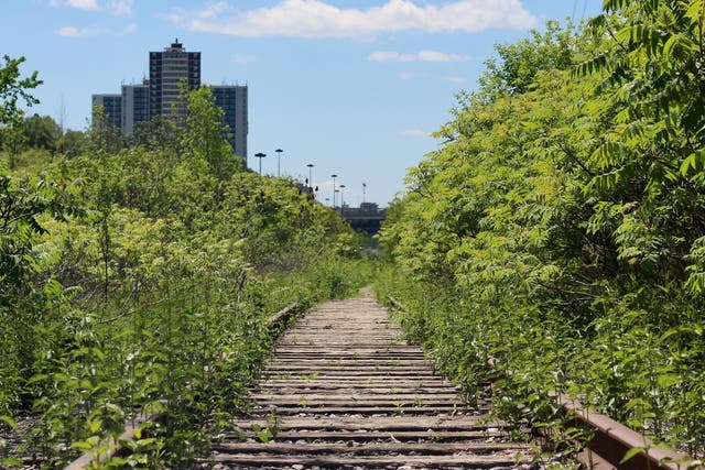 Toronto's ravine network is one of the city's best features