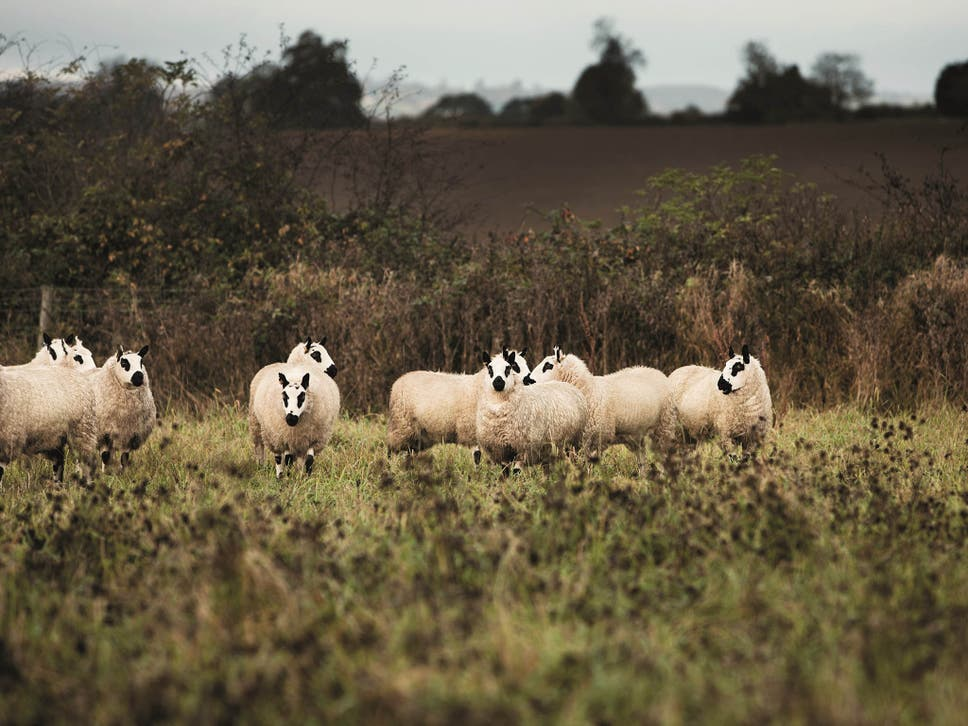 Why lamb is the most ethical meat to eat the independent why lamb is the most ethical meat to eat fandeluxe Choice Image