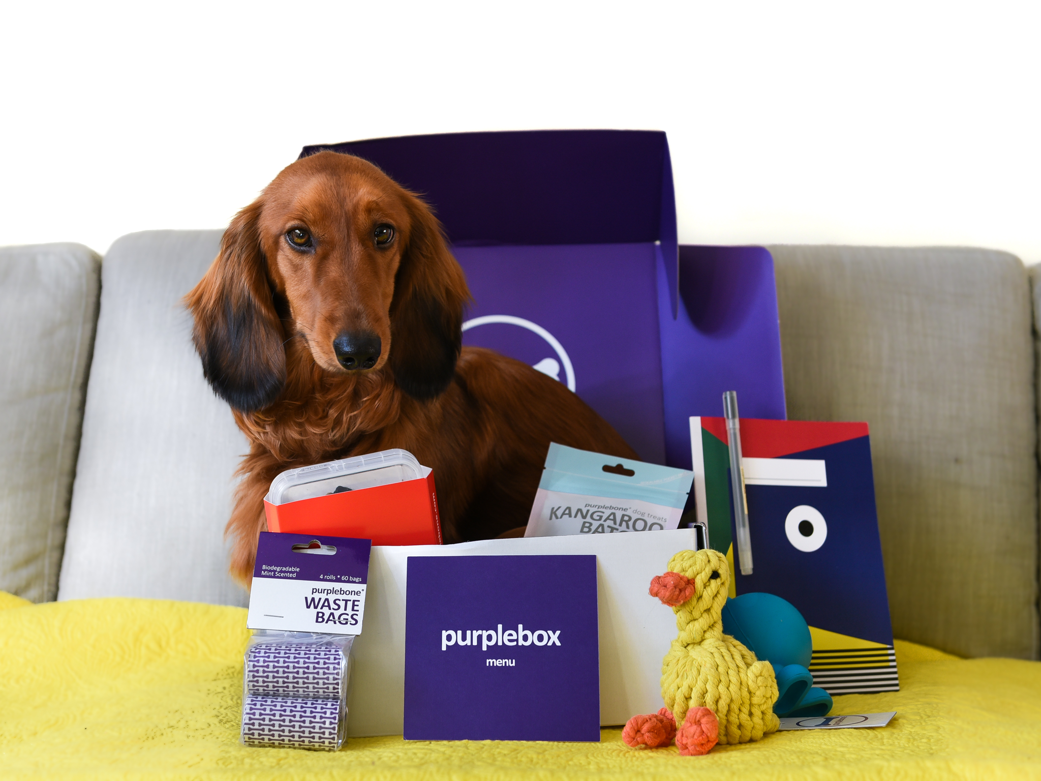 9 Best Pet Subscription Boxes The Independent