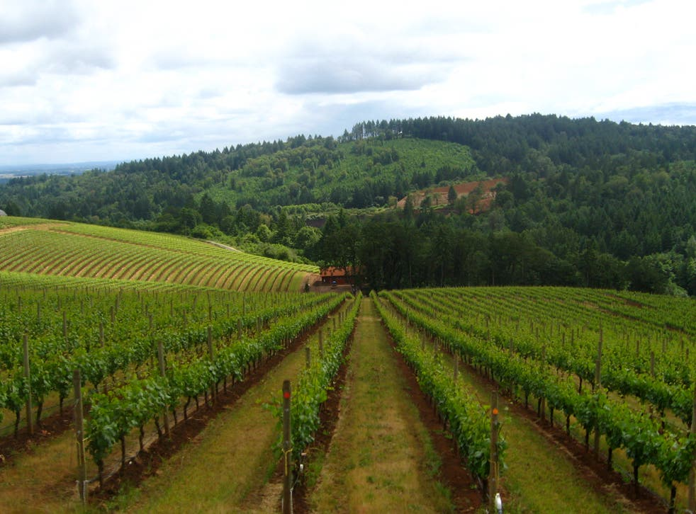 Green green grass: Willamette Valley is known for producing world-class pinot noir