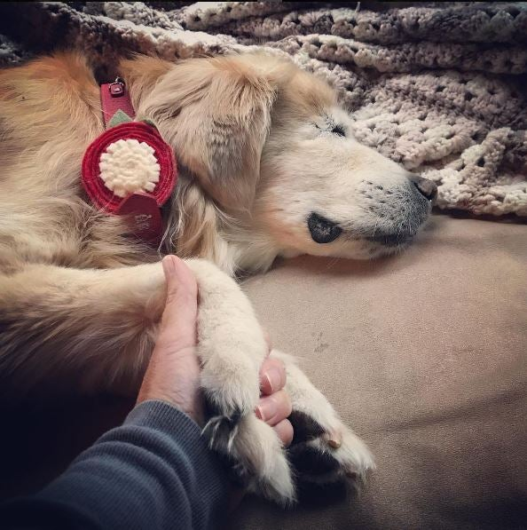 Blind therapy dog holds owner's hand before he is put down