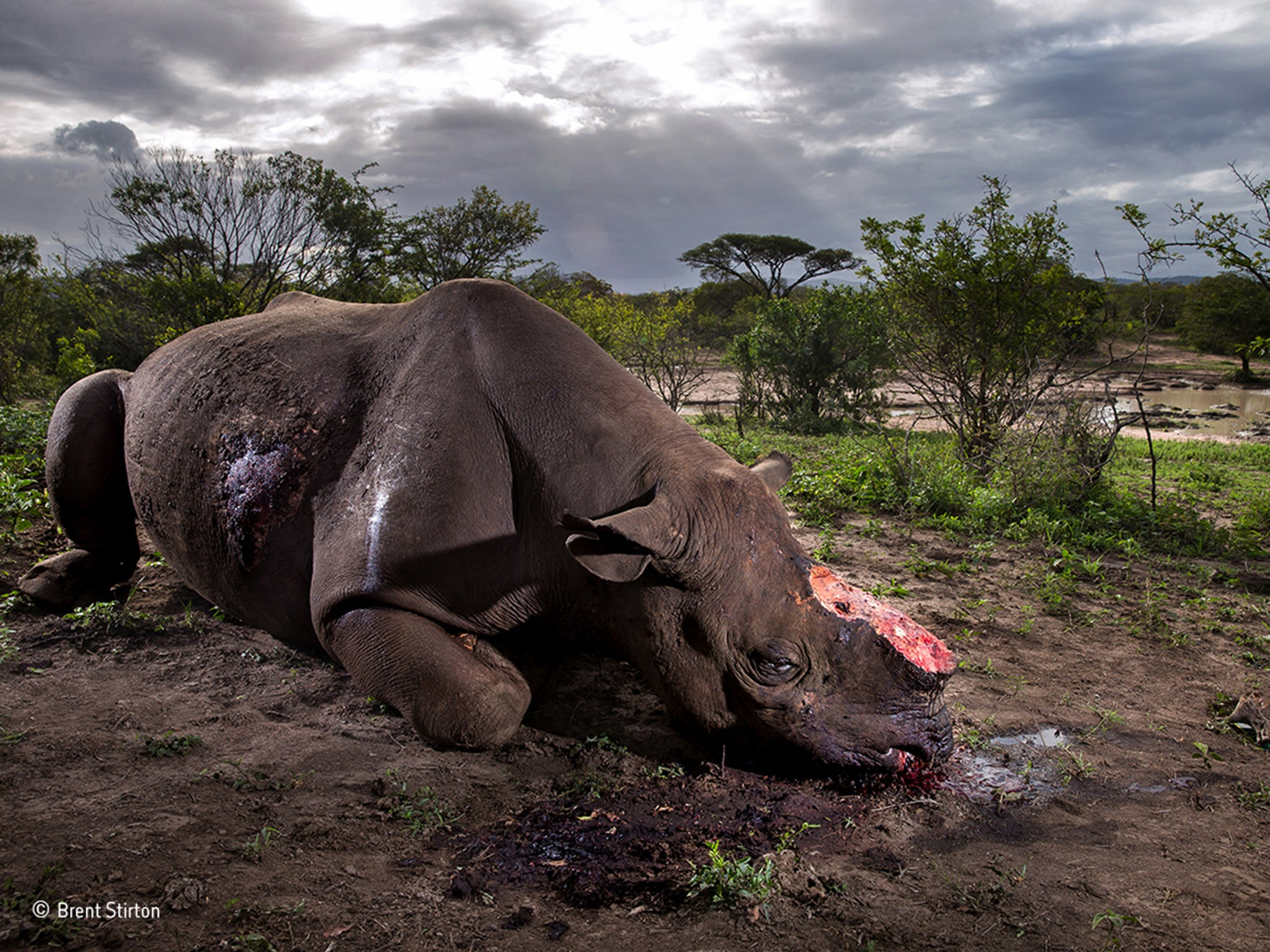 Shocking image of black rhino killed by poachers wins