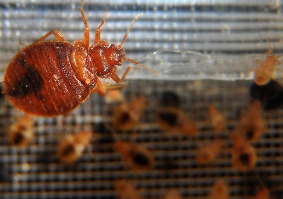 Bedbugs Are Back Here S How One Scottish Neighbourhood Is Learning