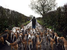 National Trust votes against ban on trail hunting