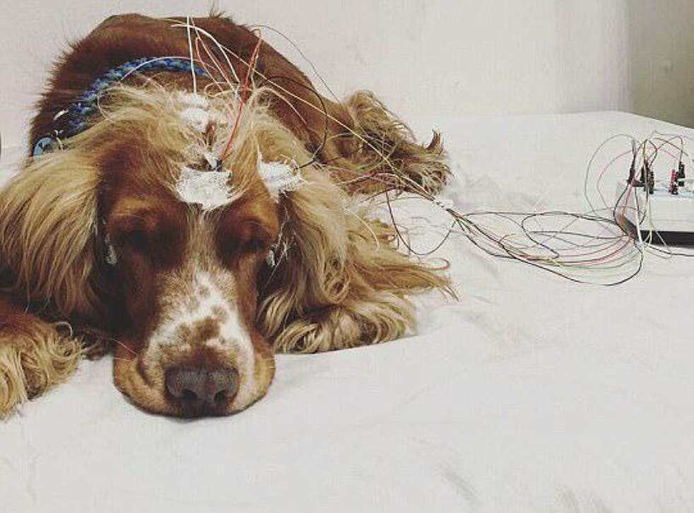 Dogs were subjected to positive and negative experiences before being allowed to sleep