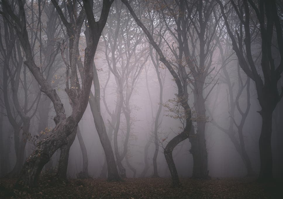 Hoia Baciu: Inside the creepiest forest in Transylvania
