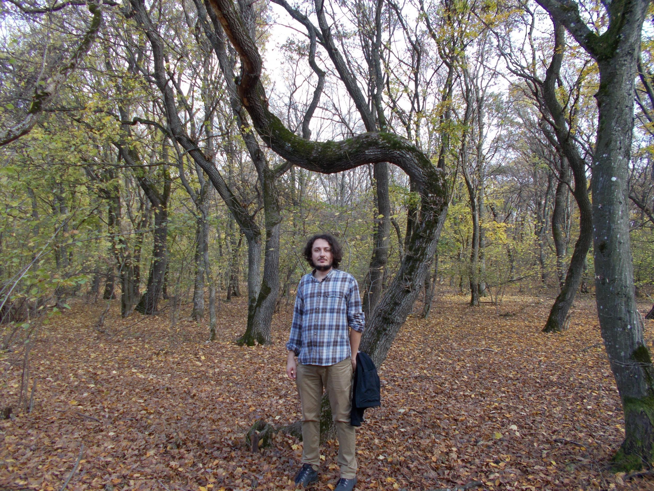 Hoia Baciu: Inside the creepiest forest in Transylvania