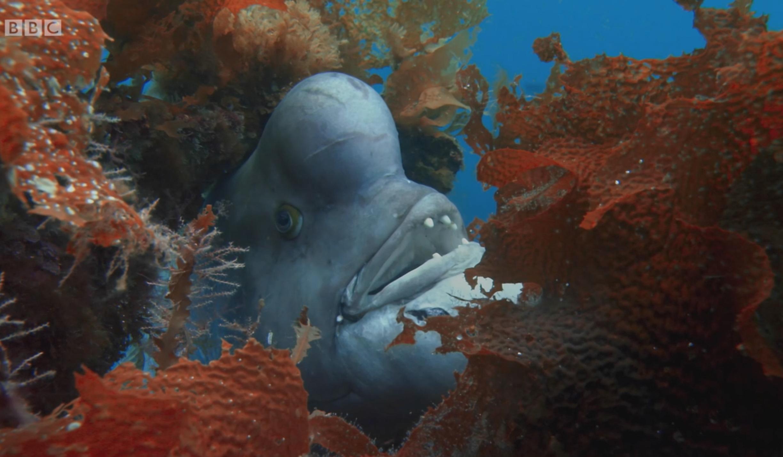 Plenty of fish - Free Dating site