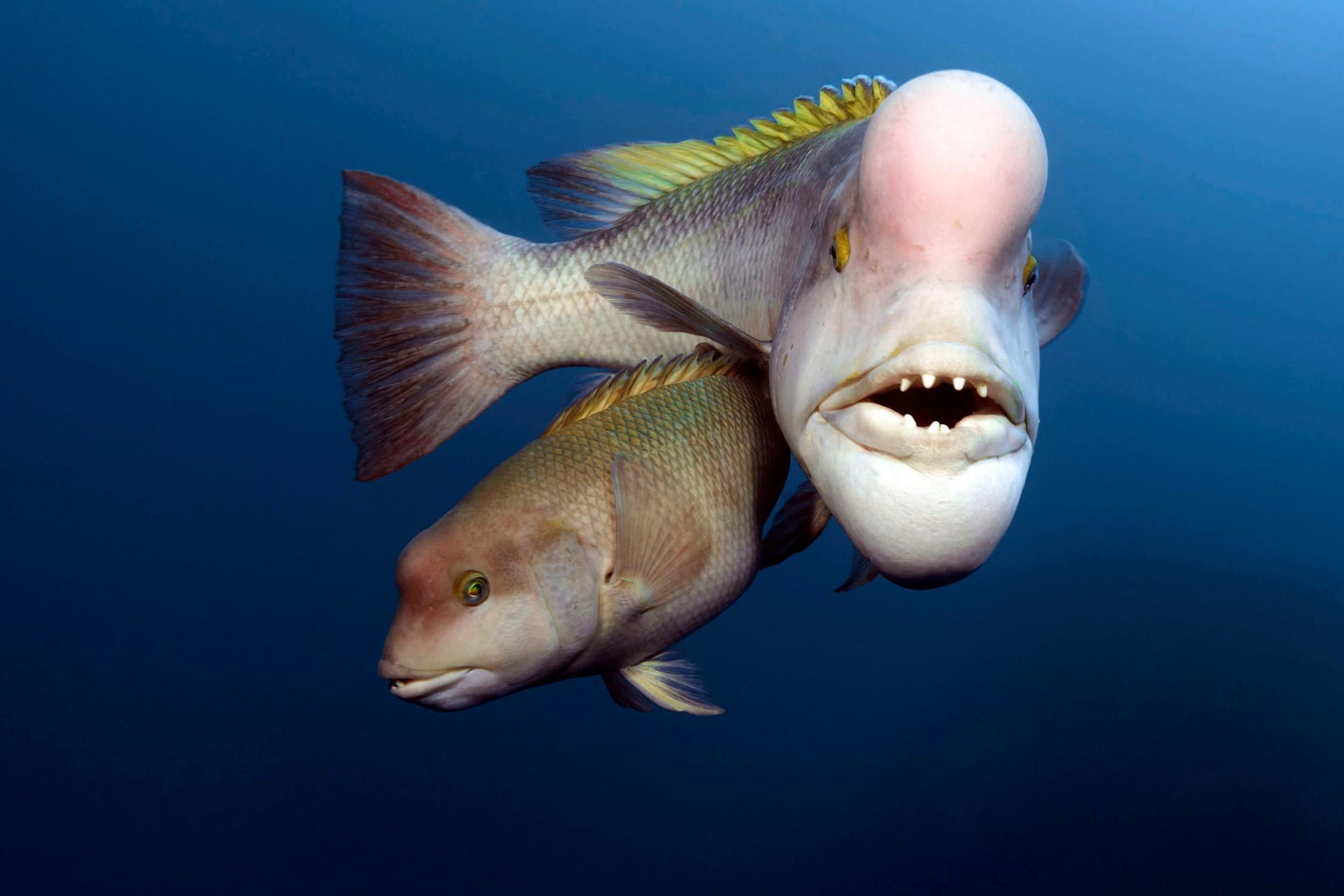 bigger fish in the sea dating There are plenty of fish in the sea -- and on tinder but what do you do if in online dating, you want to stand out and be anything but common.