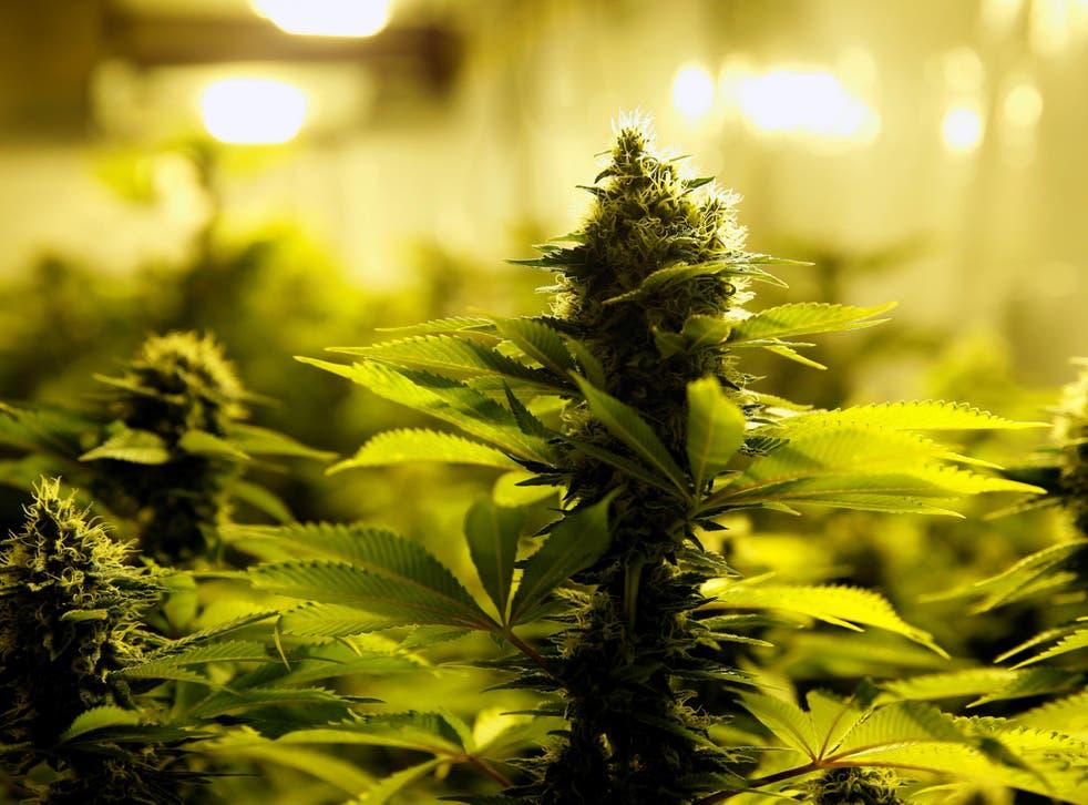 'Rastafarians are followers of a religion whose believers use marijuana for meditation,' says court