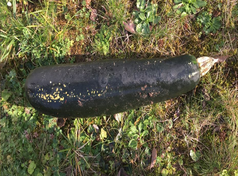 In this handout photo released by the police of Karlsruhe, a Zucchini is pictured in a garden in Bretten, Germany