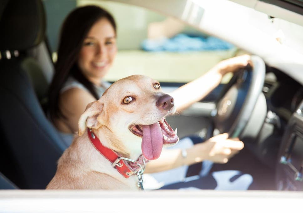 While 28 States Have Enacted Laws That Specifically Prohibit Leaving Dogs In Hot Cars Most Good Samaritans From Taking Measures To A Tred
