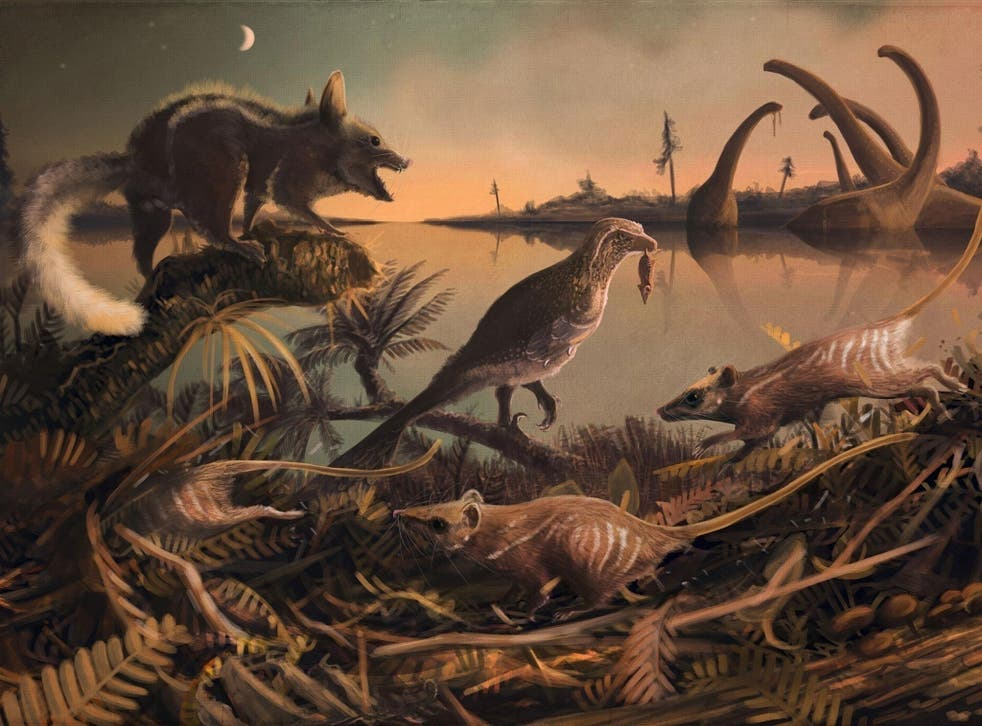 The small furry mammals scurried in the shadow of the dinosaurs 145 million years ago