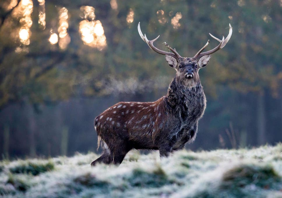 Deer hunter dating site