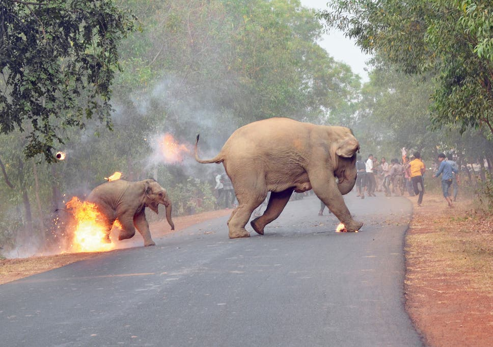 photo of baby elephant on fire after being attacked by mob wins