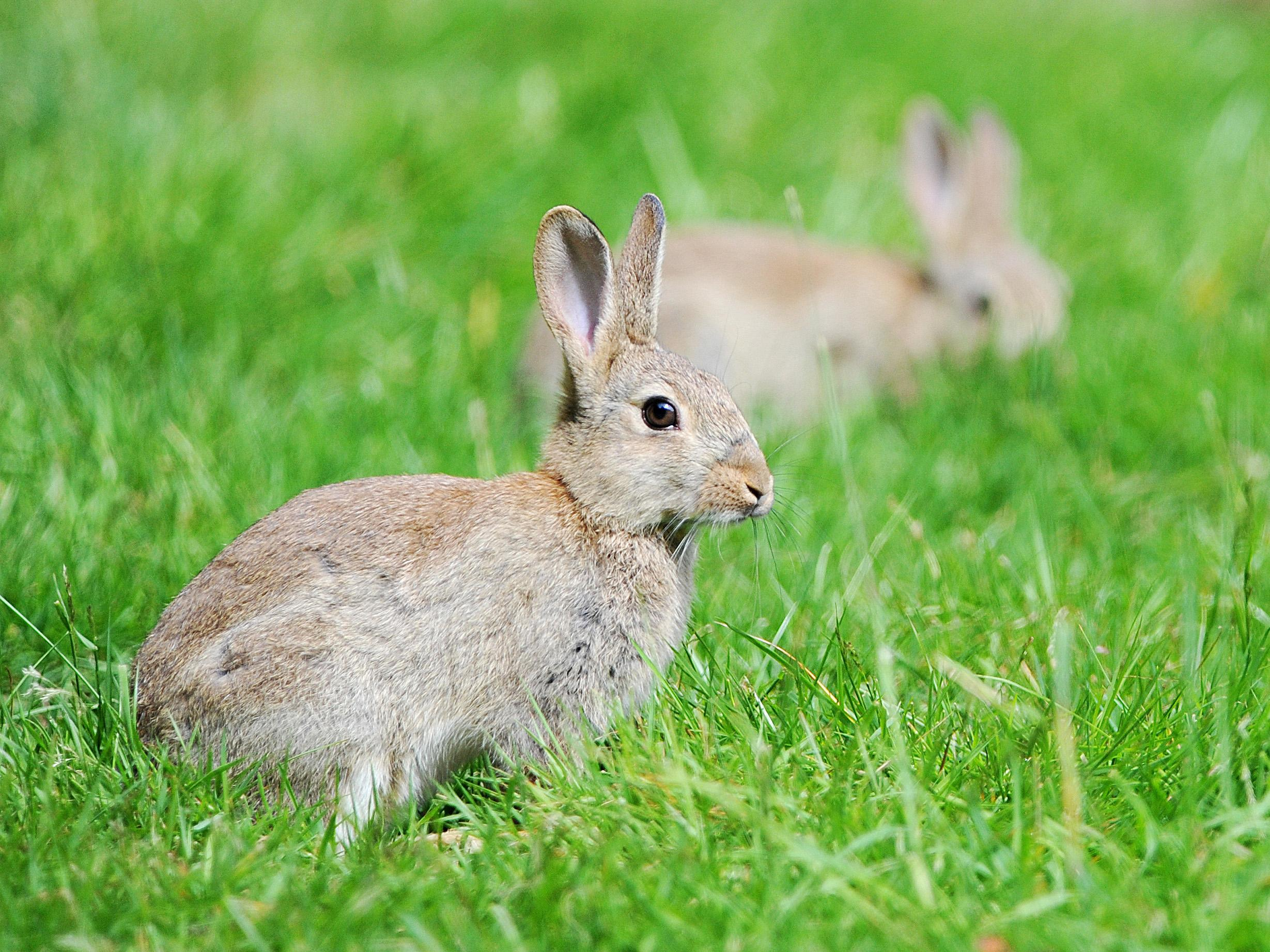 poland urges citizens to u0027breed like rabbits u0027 to counteract