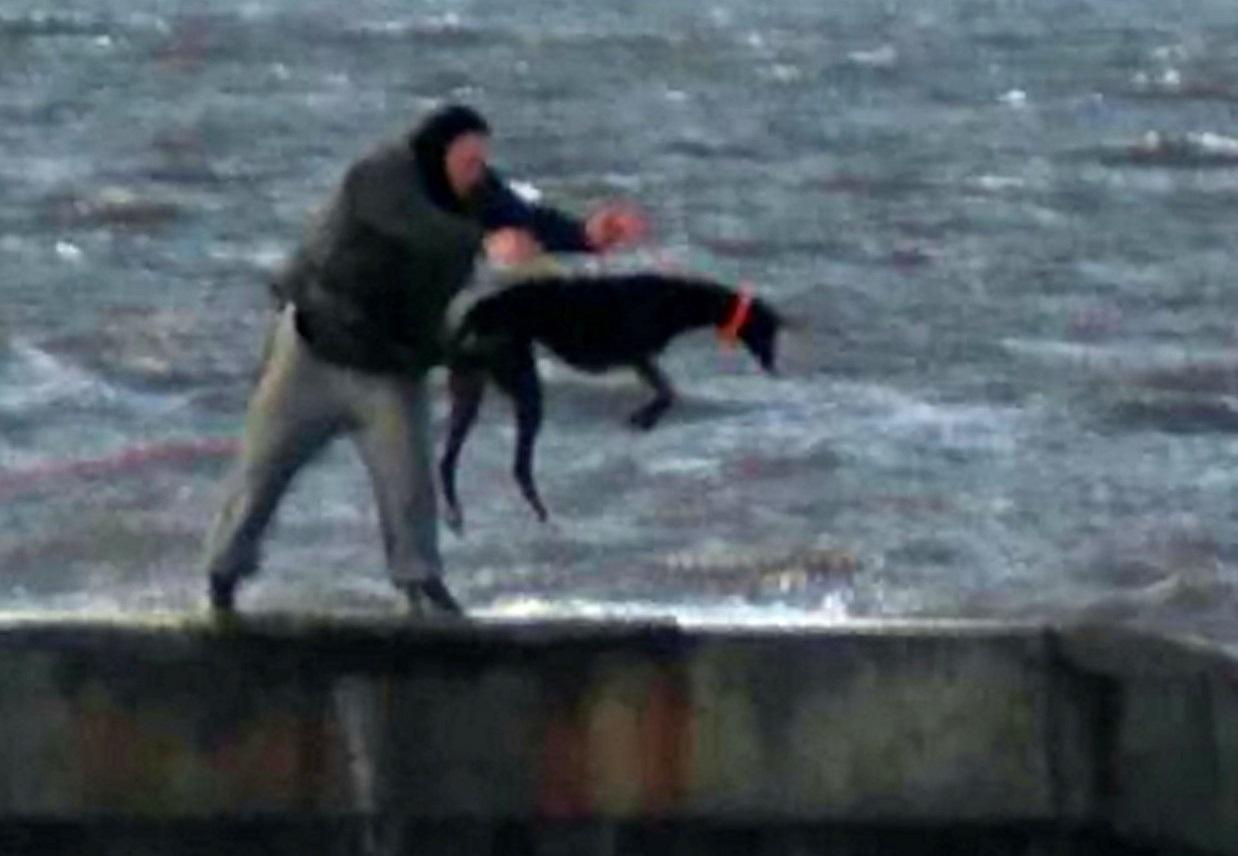 Man spotted 'repeatedly throwing terrified greyhound into freezing s…