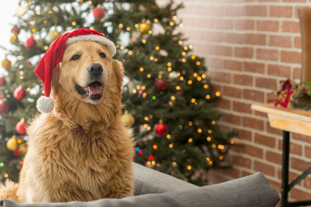 christmas market for dogs coming to london the independent