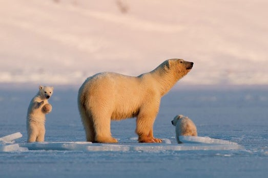 See the sights of Svalbard, Europe's last wilderness