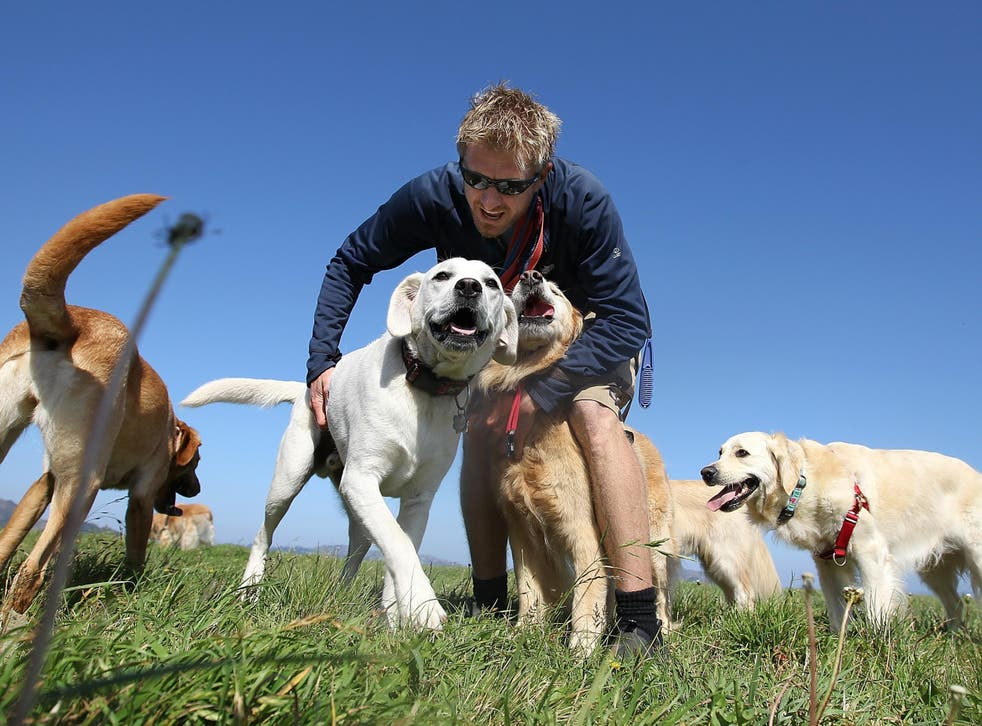 Man's best friend: owning a dog has been linked with health benefits
