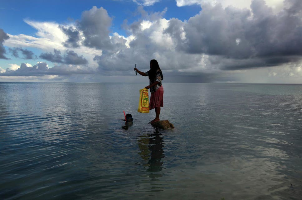 Pacific islands could lose 80 per cent of their fish because of it is projected that the region to become warmer less oxygenated more acidic and have lower production of plankton that form the base of oceanic food webs fandeluxe Choice Image