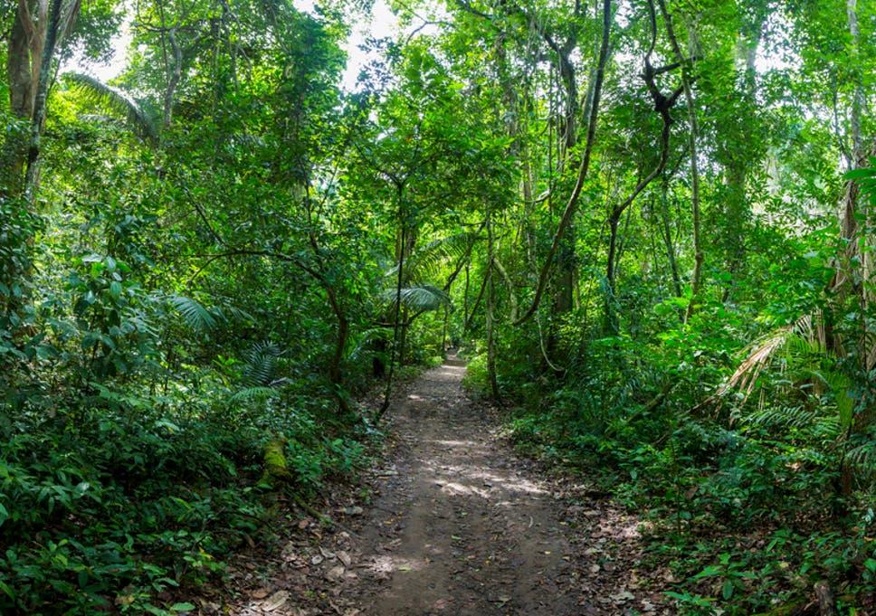 madidi national park exploring the bolivian jungle that inspired