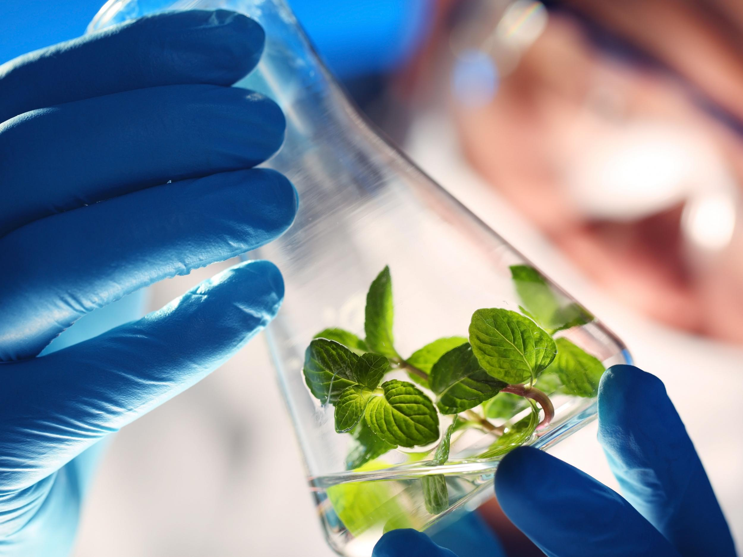 US military to develop genetically modified plants to spy for them