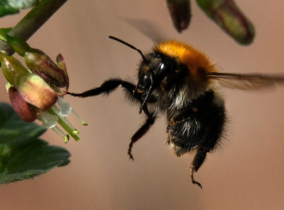 Pesticides could be designed that don't affect bumblebees